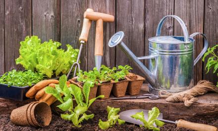 Planting a Small Garden