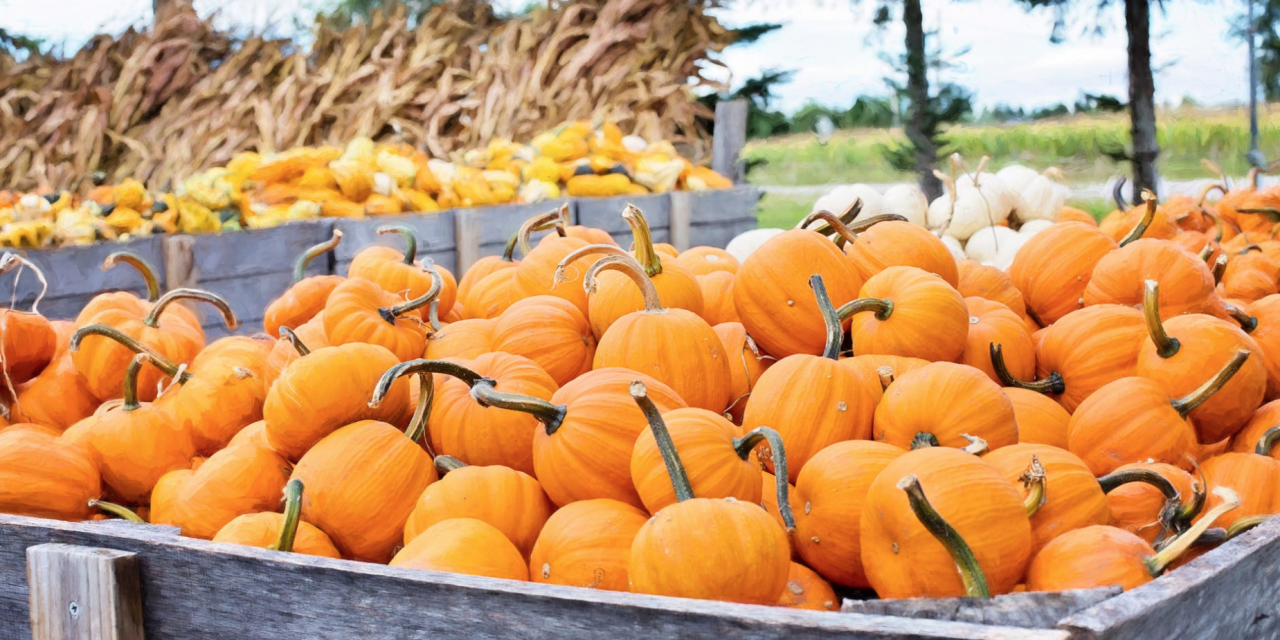 October Pumpkins!