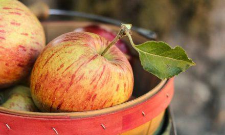 Apple Picking Anyone?