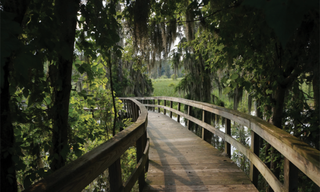 Education With Phinizy Swamp Nature Park