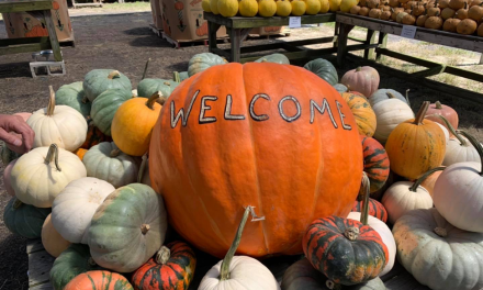 Local Pumpkin Patches and Fall Festivals